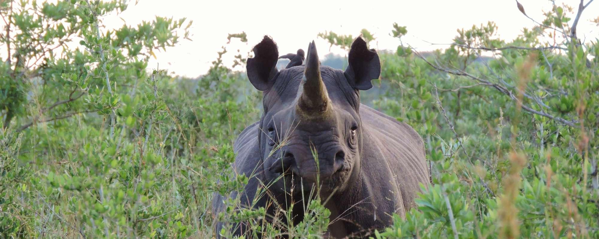 Bescherming van de neushoorn en zijn leefgebied